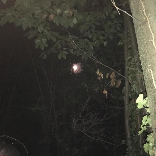 La luna si nasconde sotto gli alberi del monte Antorehellip