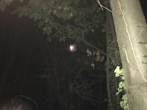 La luna si nasconde sotto gli alberi del monte Antore, a #Teolo durante la camminata al Chiar di luna!   #cooperativaterradimezzo #luna # #collieuganei #camminata #passeggiata #stories #serata #padova #tranquillità